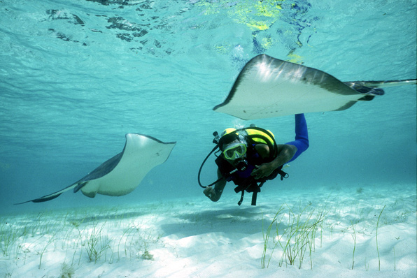Activities - Diving in Turks and Caicos